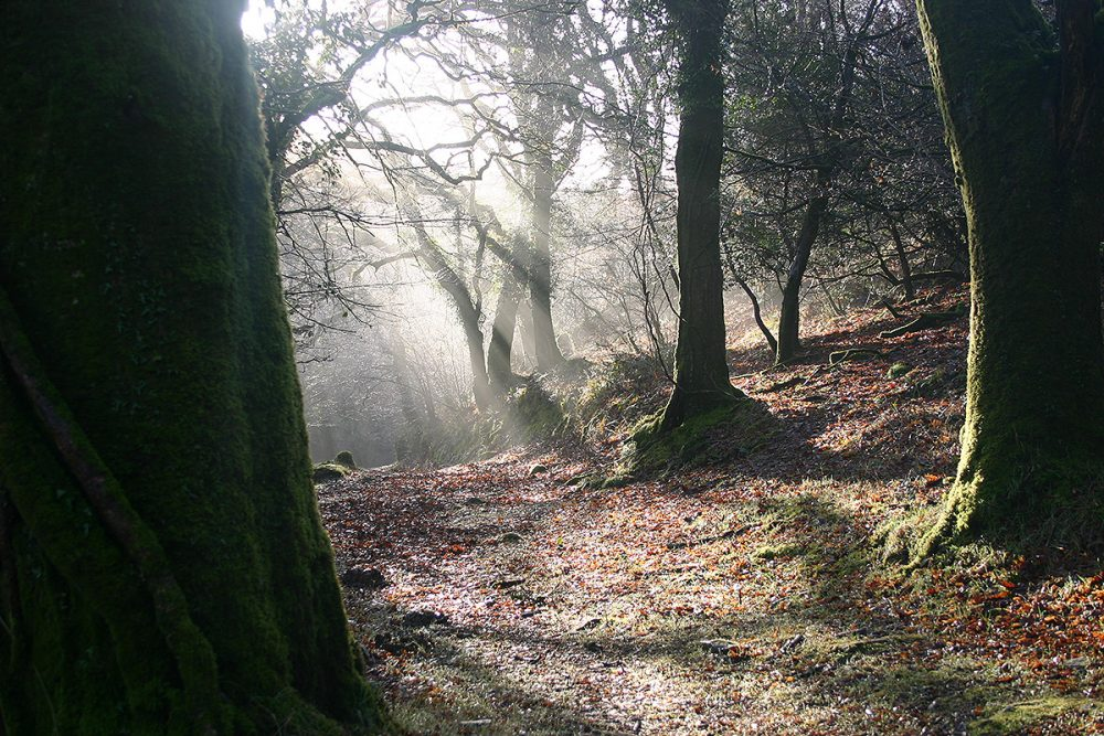 the ancient woodland at helsbury park