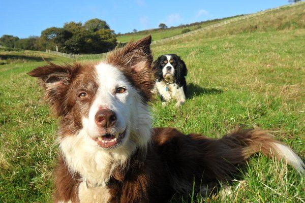 Dog holidays at Helsbury Park