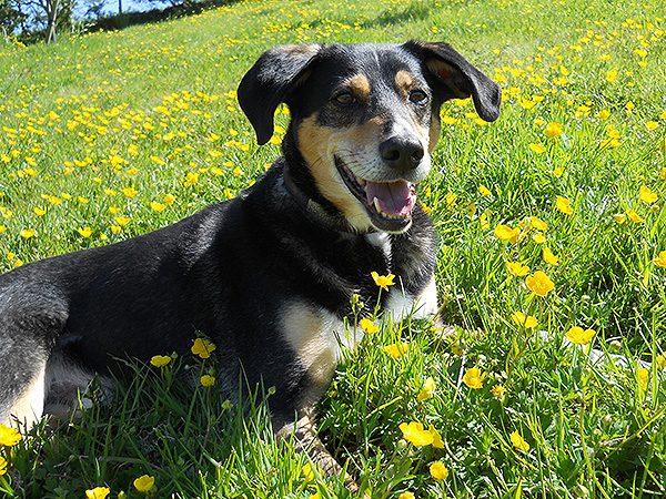 Dog friendly helsbury park