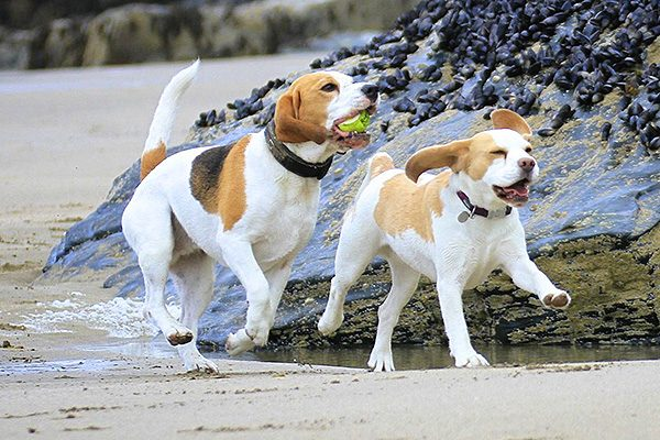 Places to go with your dog in Cornwall