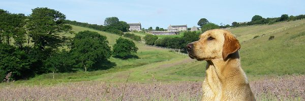 Dog friendly cottages in the heart of north cornwall