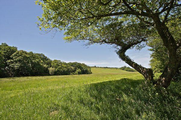 pasture at helsbury park