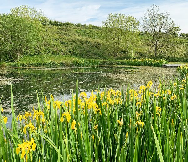 Helsbury Park Pond Wildlife Nature Walks