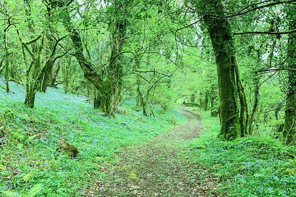 forest bathing at helsbury park