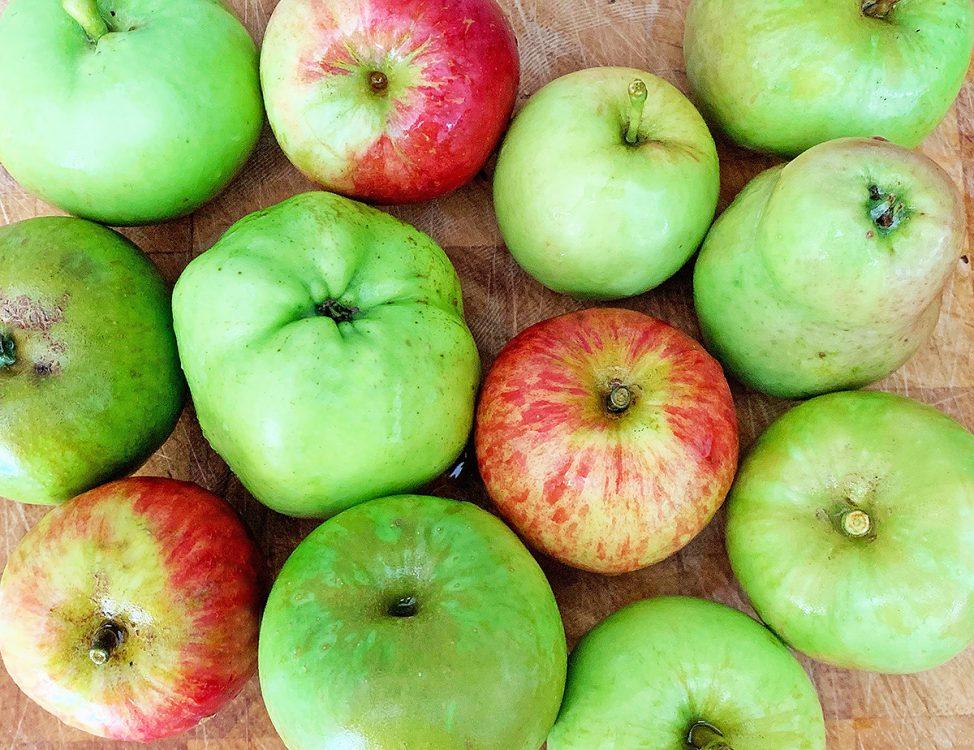 helsbury apple harvest