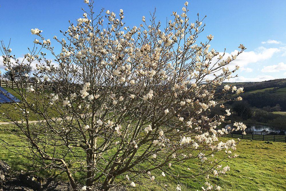 helsbury park spring